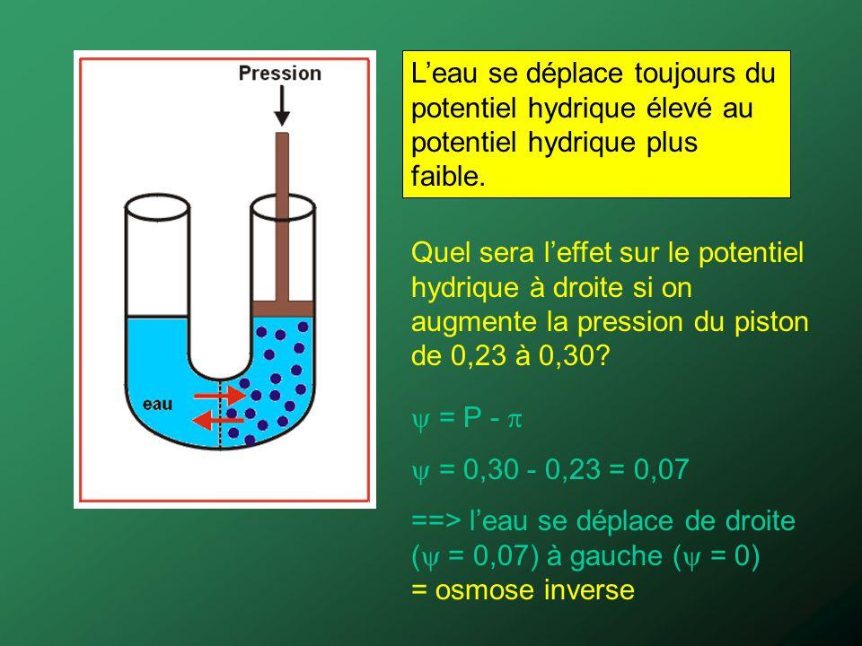 L'eau se déplace toujours du potentiel hydrique élevé au potentiel hydrique plus faible.