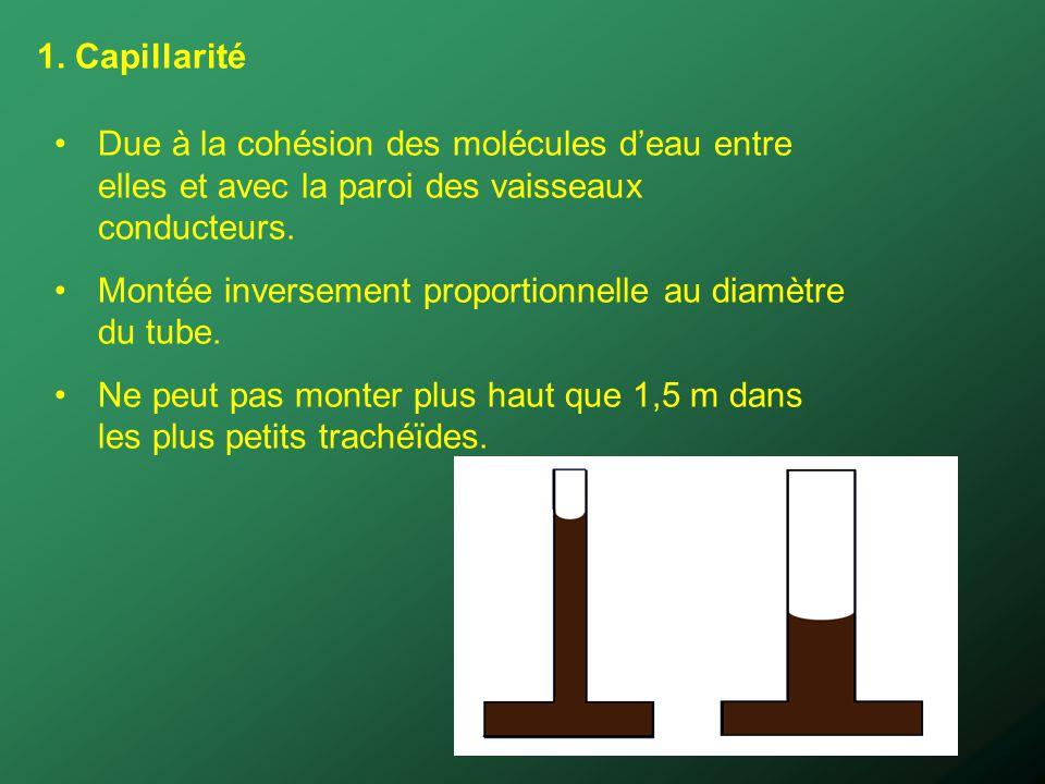 1. Capillarité Due à la cohésion des molécules d'eau entre elles et avec la paroi des vaisseaux conducteurs.