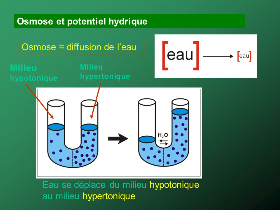 Osmose et potentiel hydrique