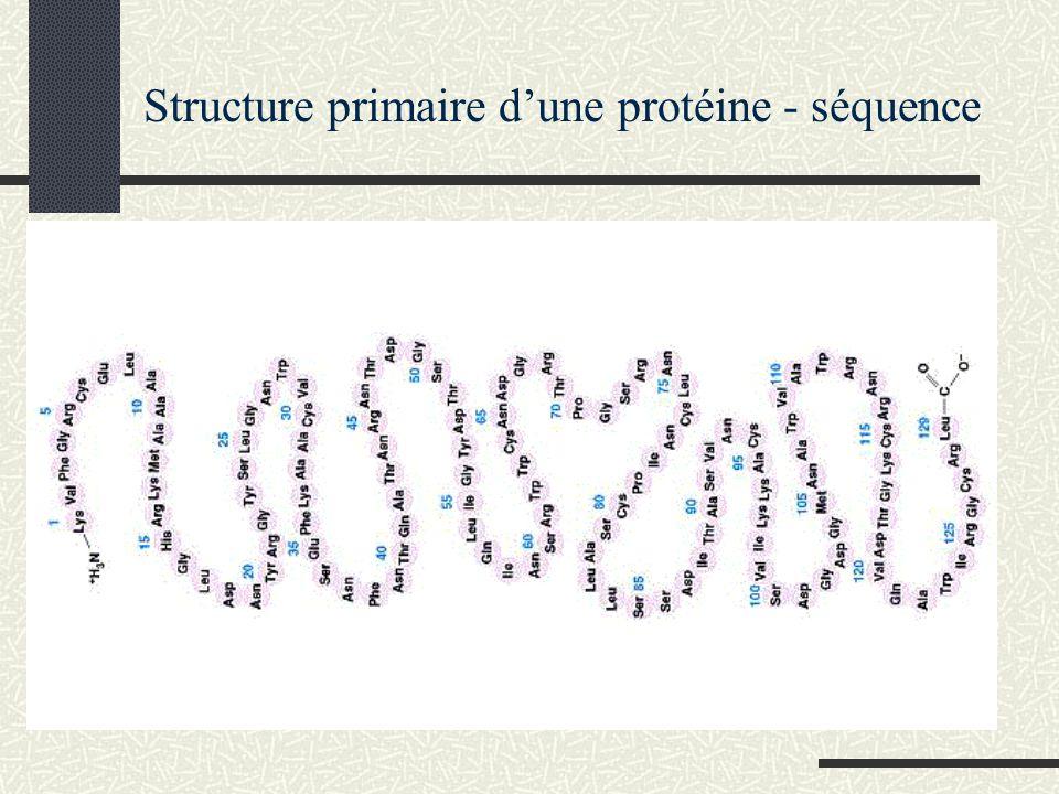 Structure primaire d'une protéine - séquence