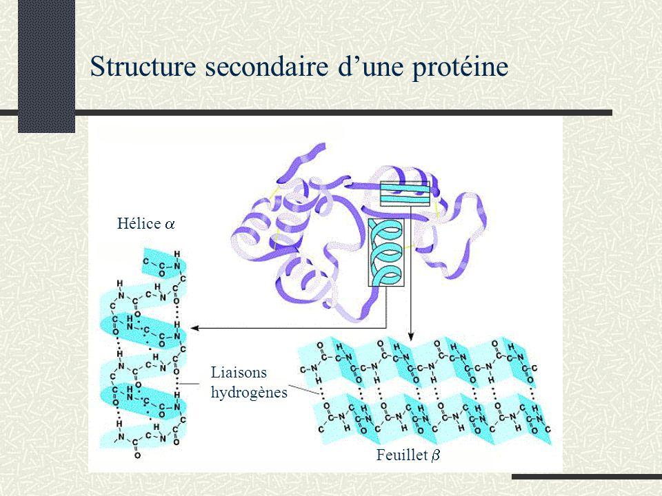 Structure secondaire d'une protéine