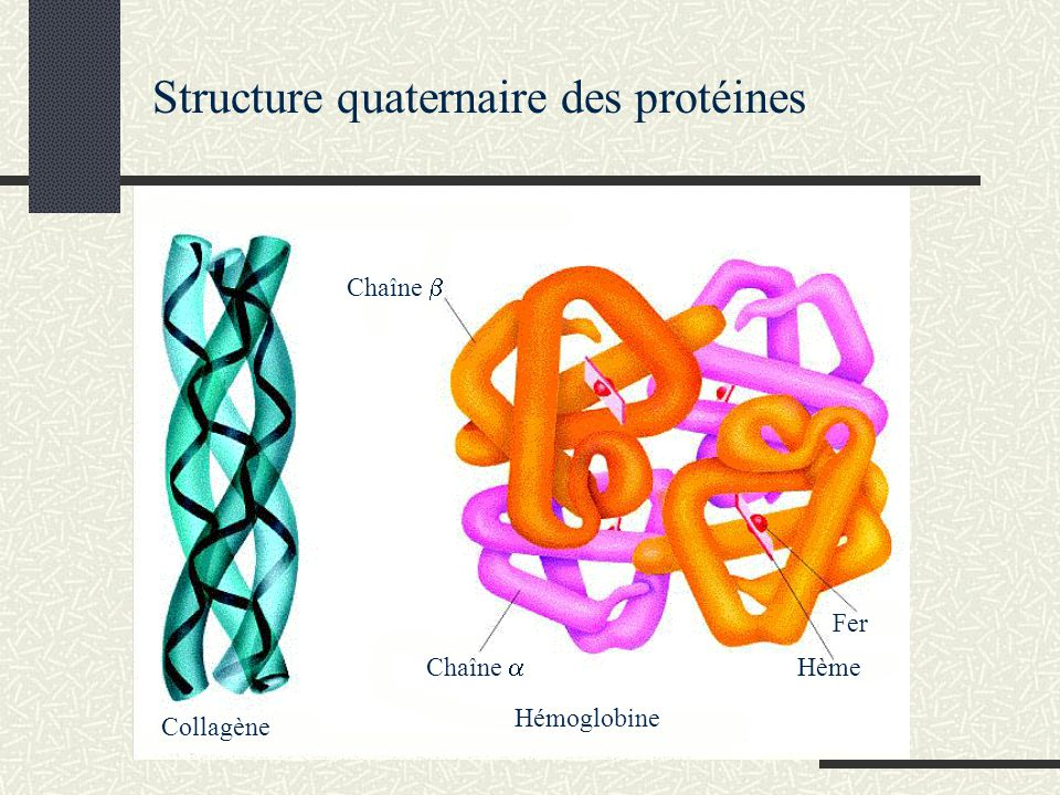 Structure quaternaire des protéines