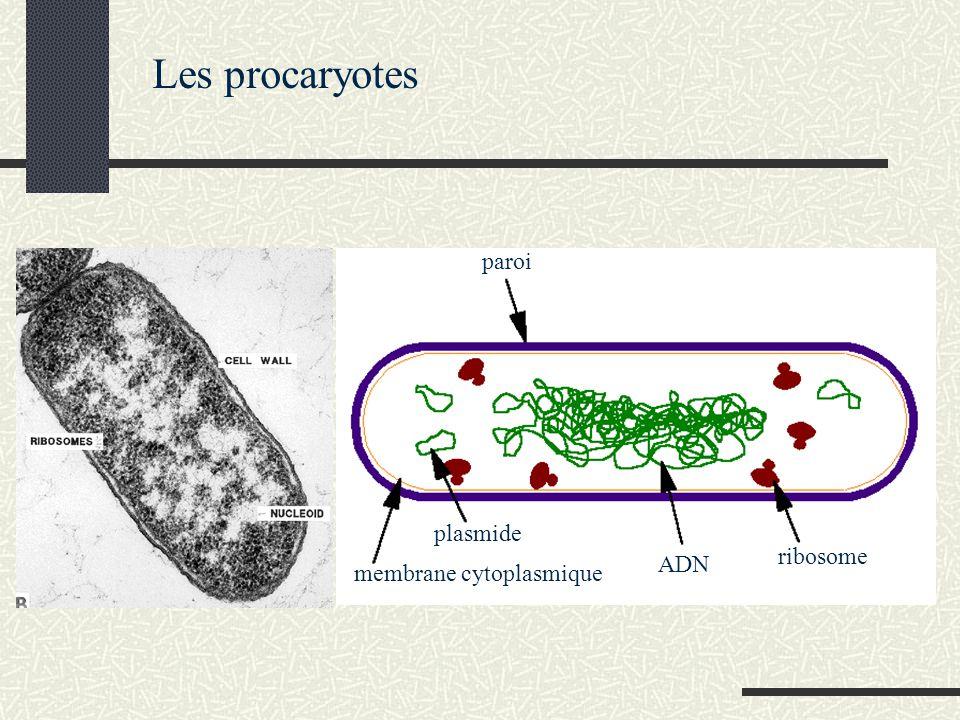 Les procaryotes paroi plasmide ribosome ADN membrane cytoplasmique