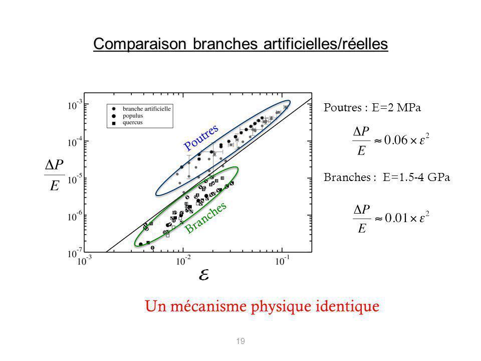 Comparaison branches artificielles/réelles