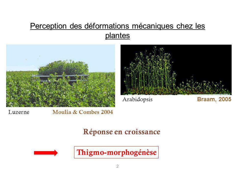 Perception des déformations mécaniques chez les plantes