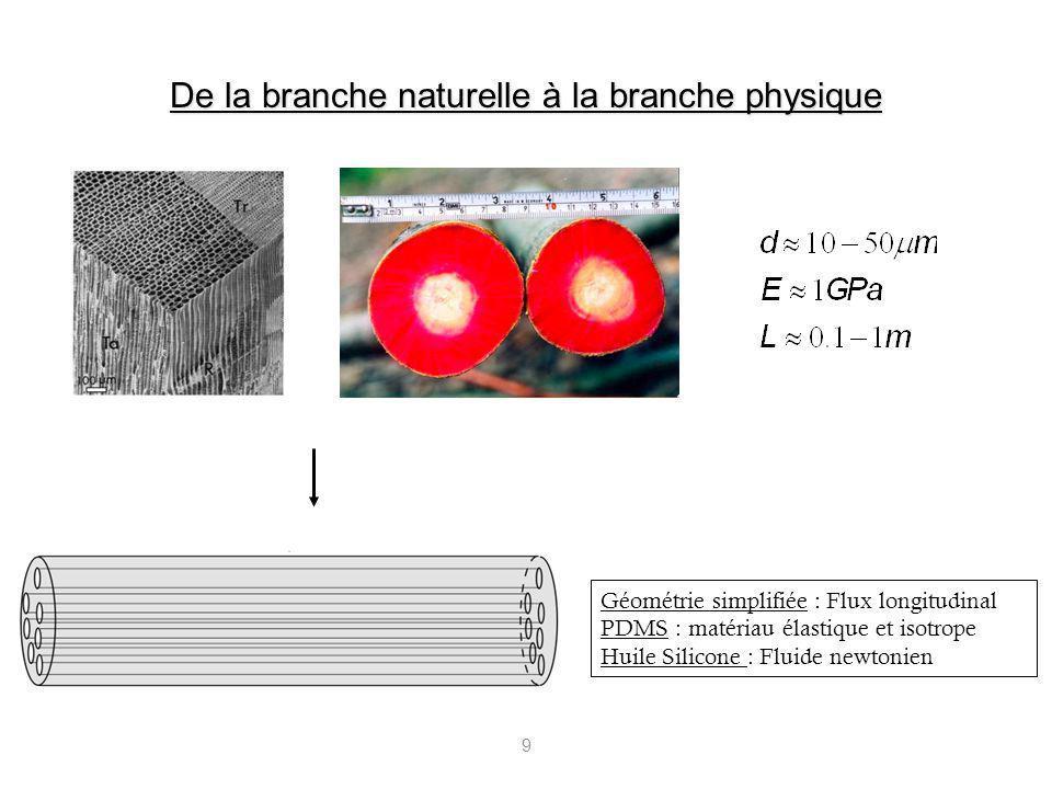De la branche naturelle à la branche physique
