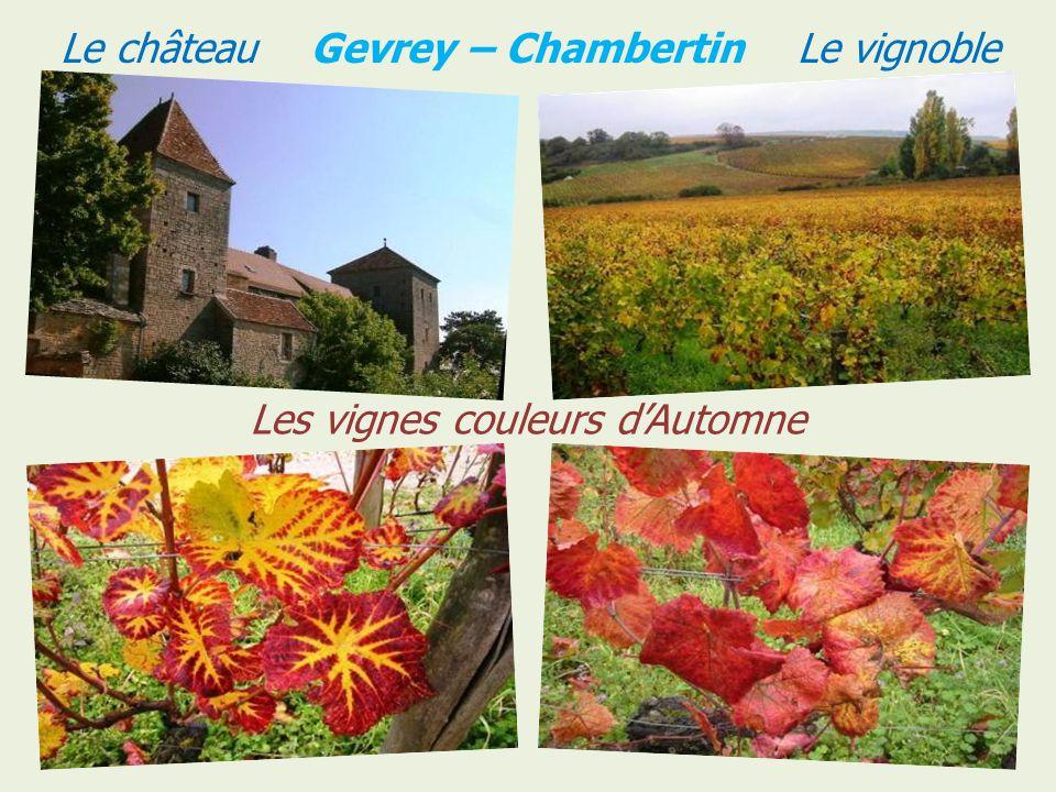 Le château Gevrey – Chambertin Le vignoble
