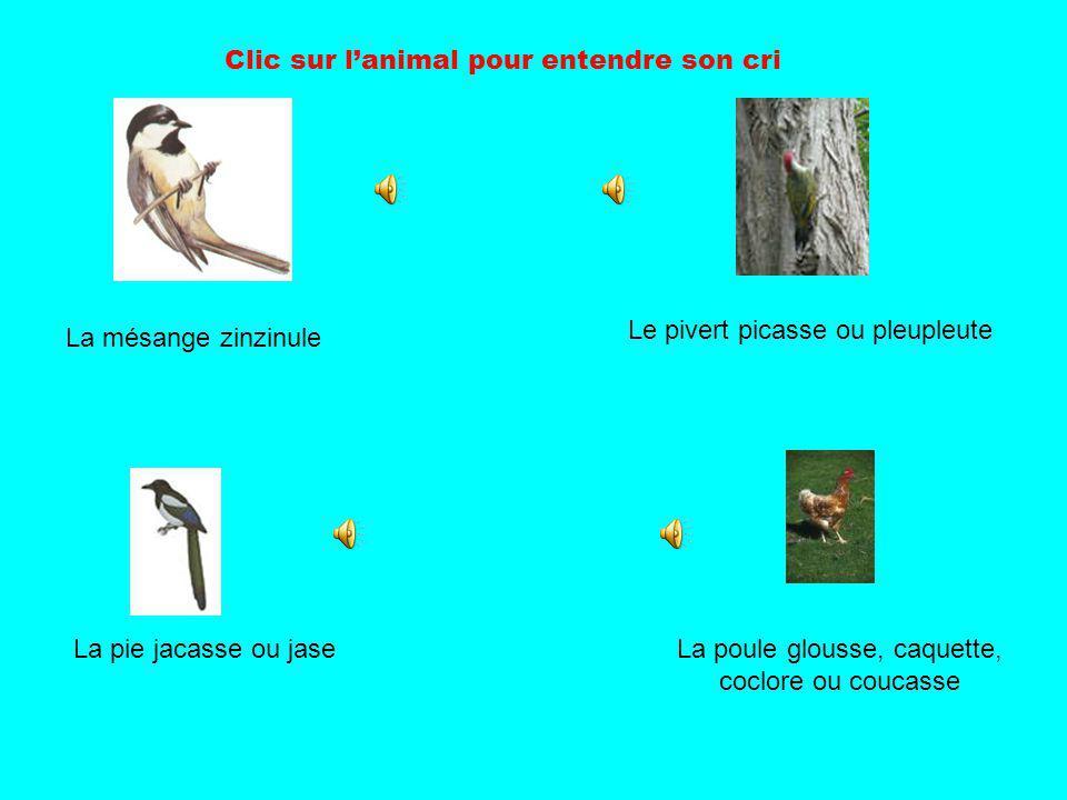 La poule glousse, caquette, coclore ou coucasse