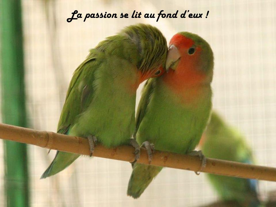 La passion se lit au fond d'eux !