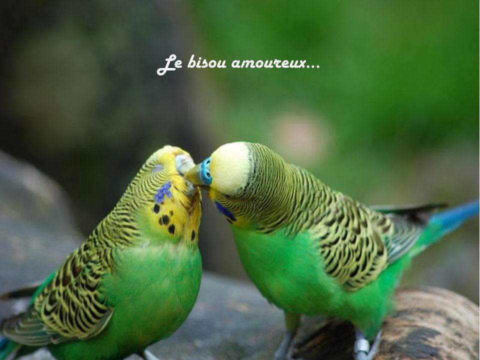 Le bisou amoureux…