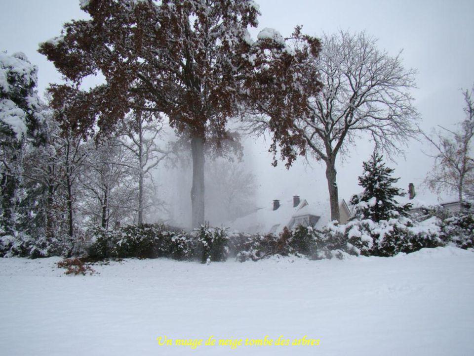 Un nuage de neige tombe des arbres
