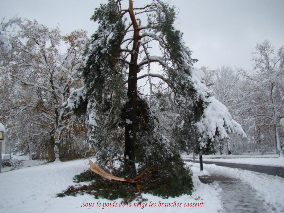 Sous le poids de la neige les branches cassent