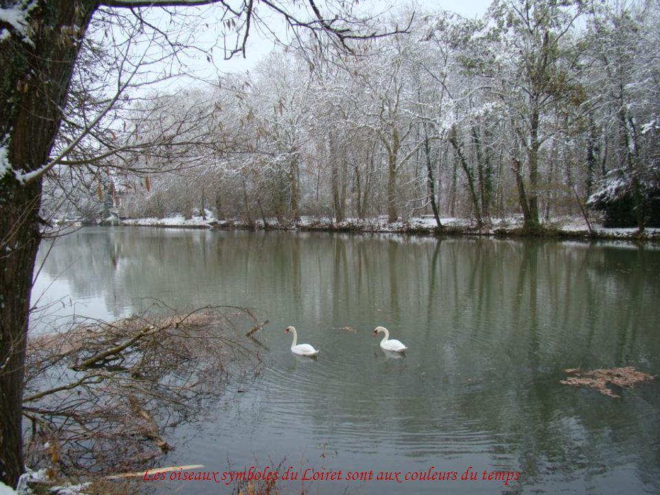 Les oiseaux symboles du Loiret sont aux couleurs du temps