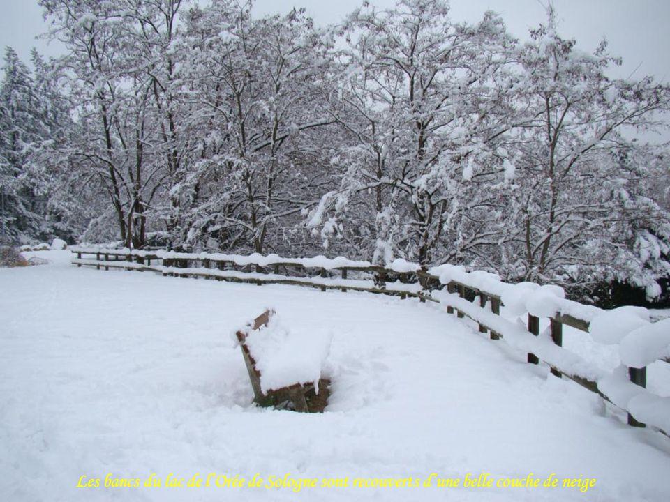 Les bancs du lac de l'Orée de Sologne sont recouverts d'une belle couche de neige