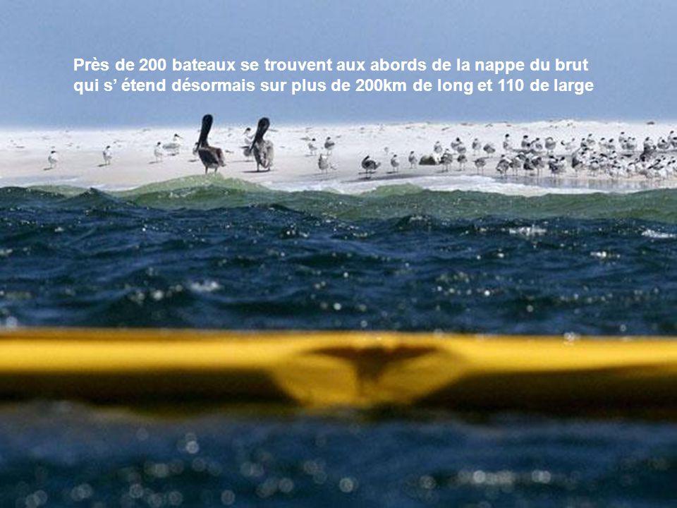 Près de 200 bateaux se trouvent aux abords de la nappe du brut qui s' étend désormais sur plus de 200km de long et 110 de large