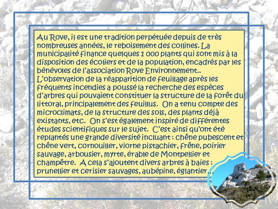 Au Rove, il est une tradition perpétuée depuis de très nombreuses années, le reboisement des collines.