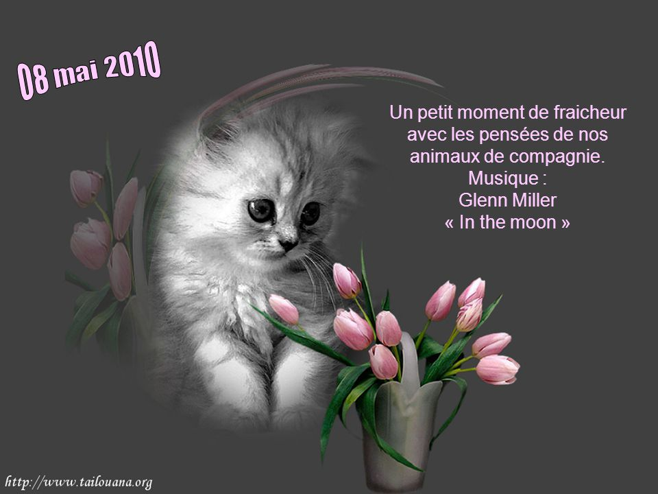 08 mai 2010 Un petit moment de fraicheur avec les pensées de nos animaux de compagnie.