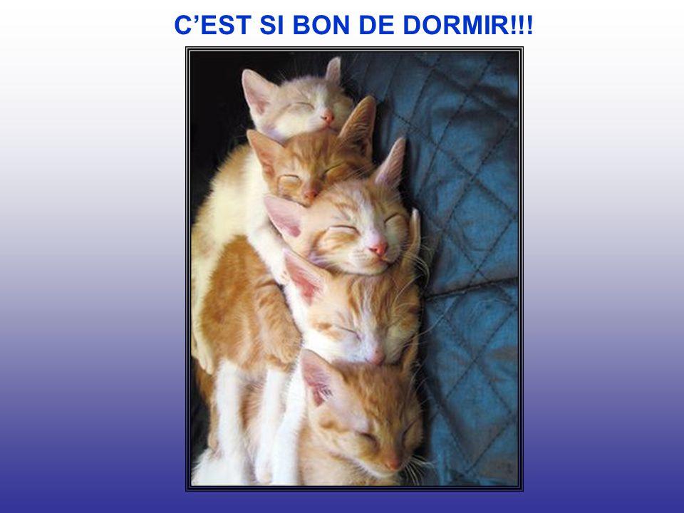 C'EST SI BON DE DORMIR!!!
