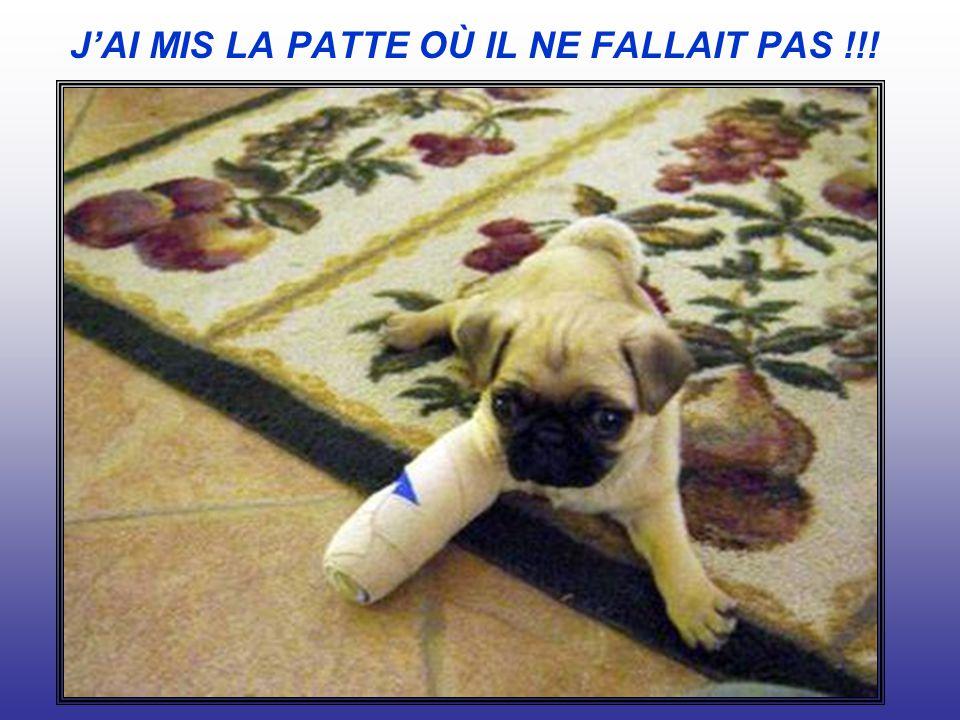 J'AI MIS LA PATTE OÙ IL NE FALLAIT PAS !!!