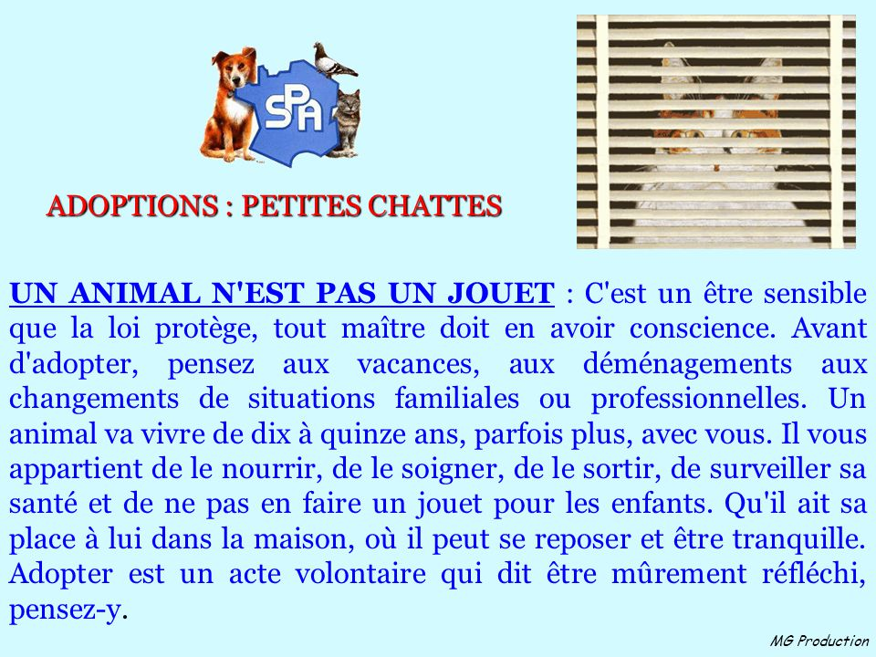 ADOPTIONS : PETITES CHATTES