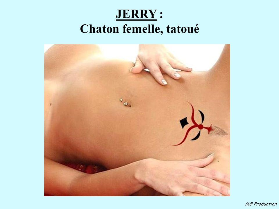 JERRY : Chaton femelle, tatoué