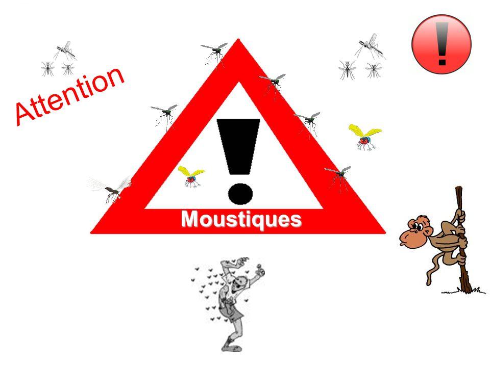 Attention Moustiques