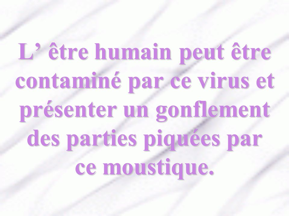L' être humain peut être contaminé par ce virus et présenter un gonflement des parties piquées par ce moustique.