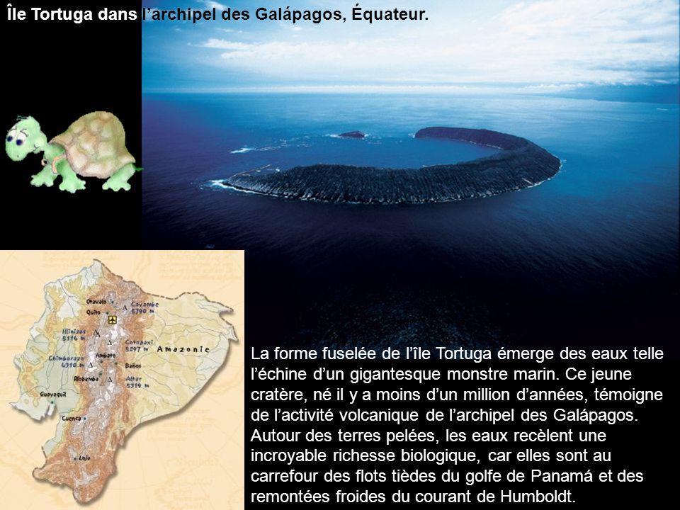 Île Tortuga dans l'archipel des Galápagos, Équateur.