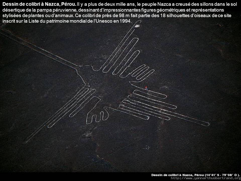 Dessin de colibri à Nazca, Pérou