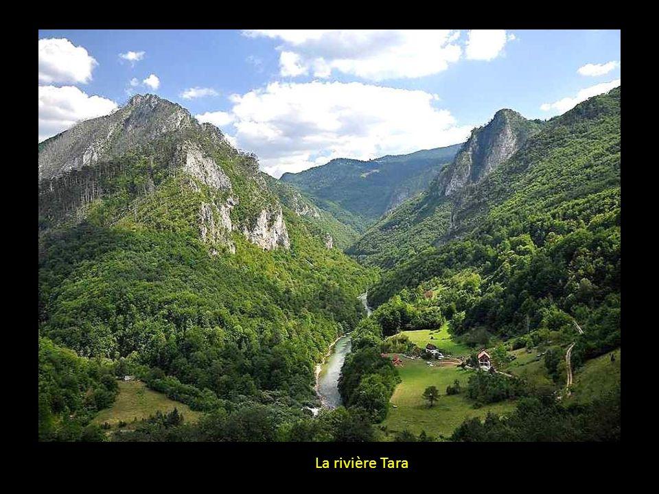 La rivière Tara
