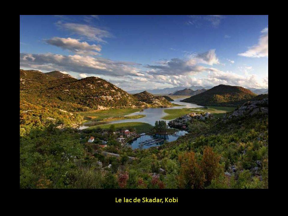 Le lac de Skadar, Kobi