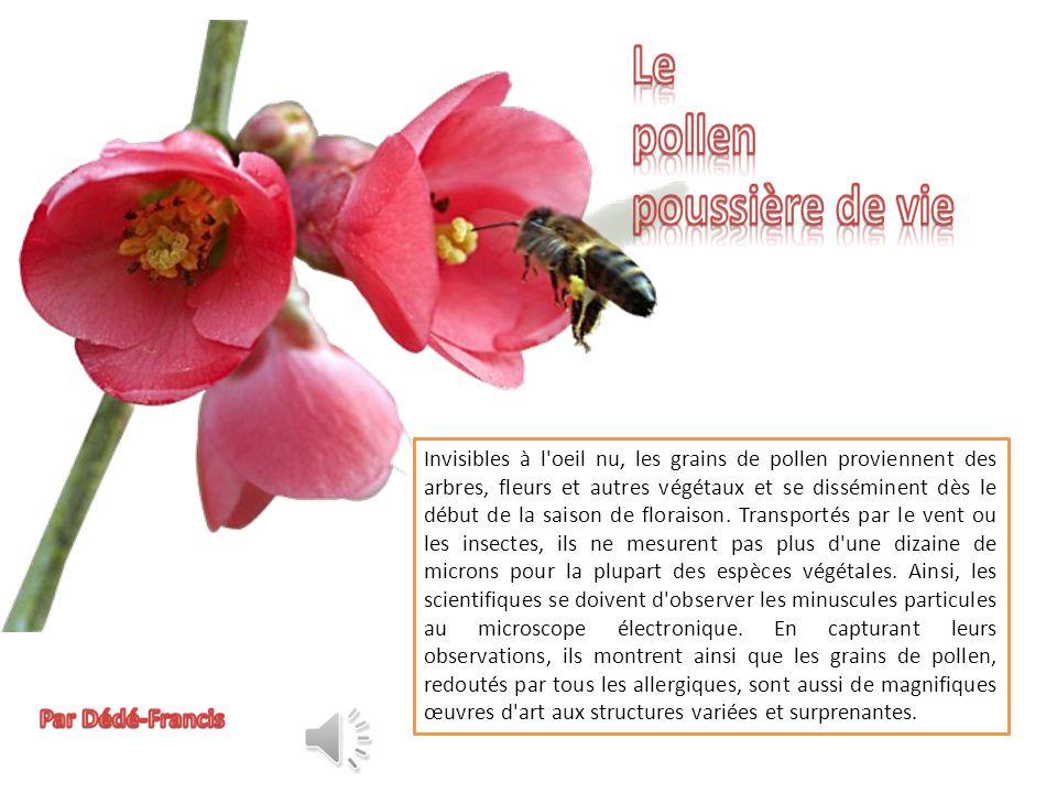 Invisibles à l oeil nu, les grains de pollen proviennent des arbres, fleurs et autres végétaux et se disséminent dès le début de la saison de floraison.