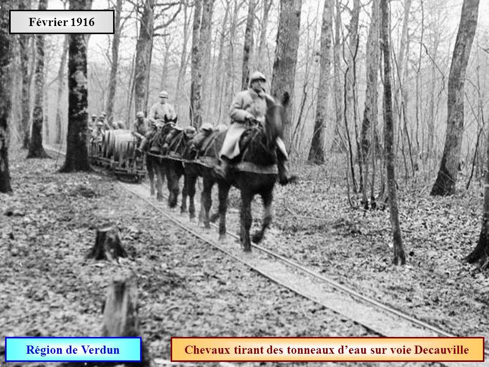 Chevaux tirant des tonneaux d'eau sur voie Decauville