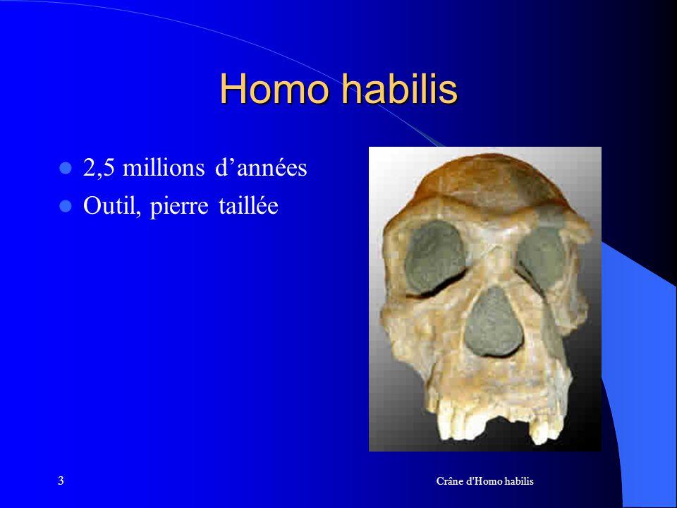 Homo habilis 2,5 millions d'années Outil, pierre taillée 3