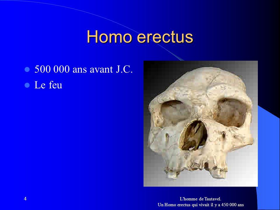 L homme de Tautavel. Un Homo erectus qui vivait il y a 450 000 ans