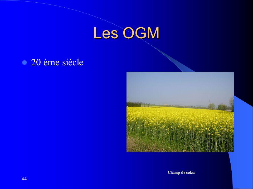 Les OGM 20 ème siècle Champ de colza 44