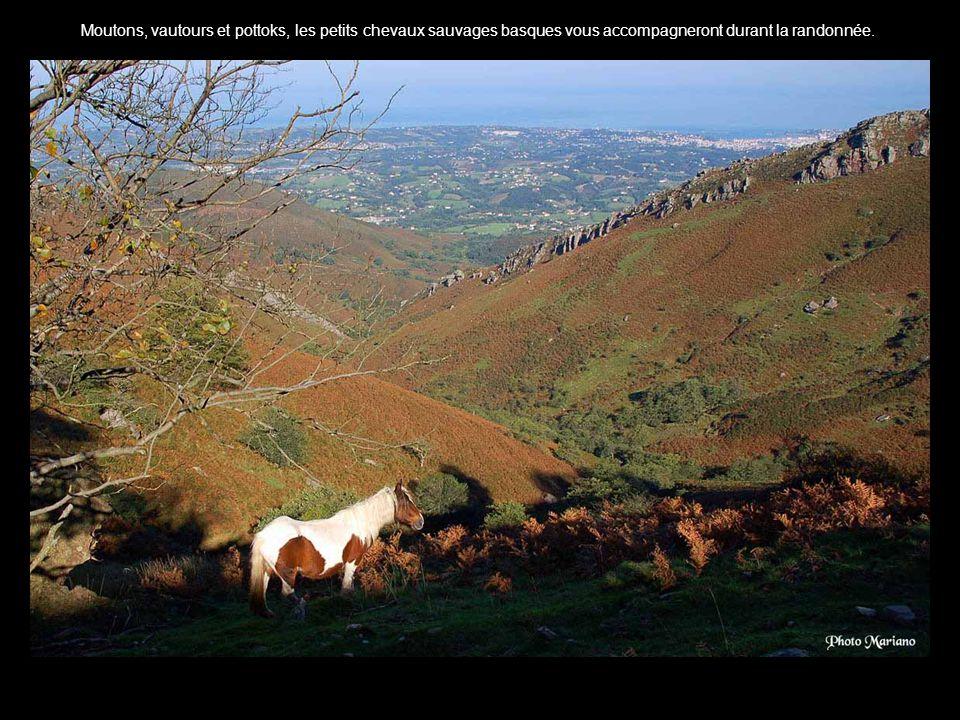 Moutons, vautours et pottoks, les petits chevaux sauvages basques vous accompagneront durant la randonnée..