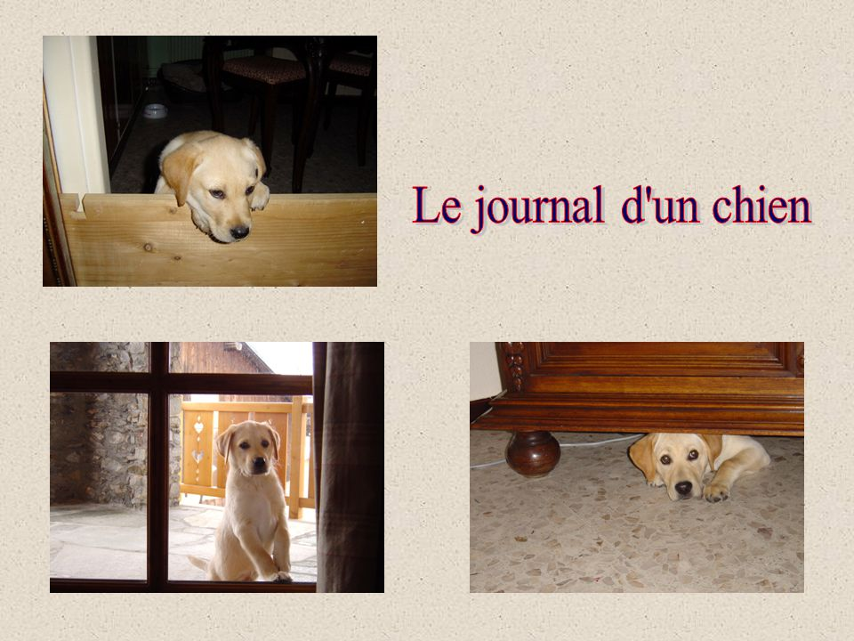 Le journal d un chien