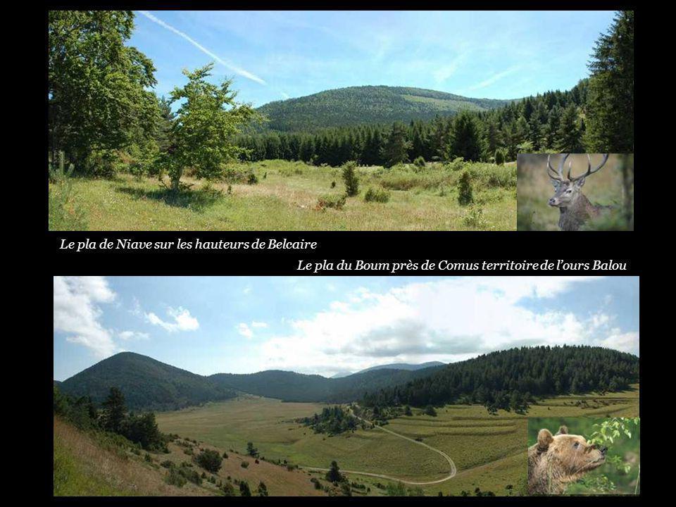 Le pla de Niave sur les hauteurs de Belcaire