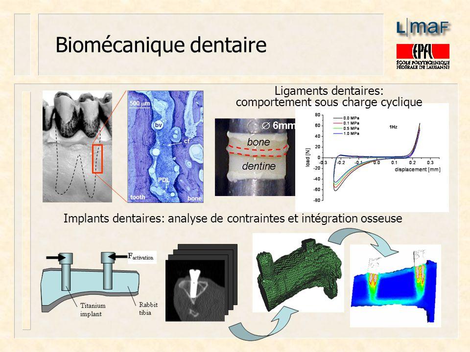 Biomécanique dentaire