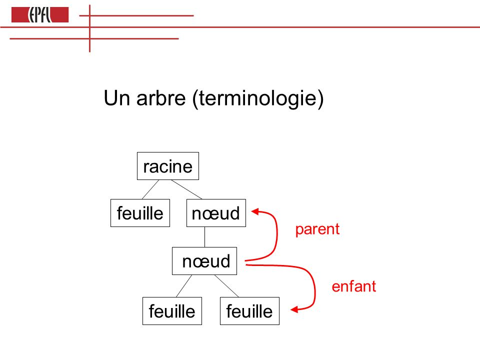 Un arbre (terminologie)