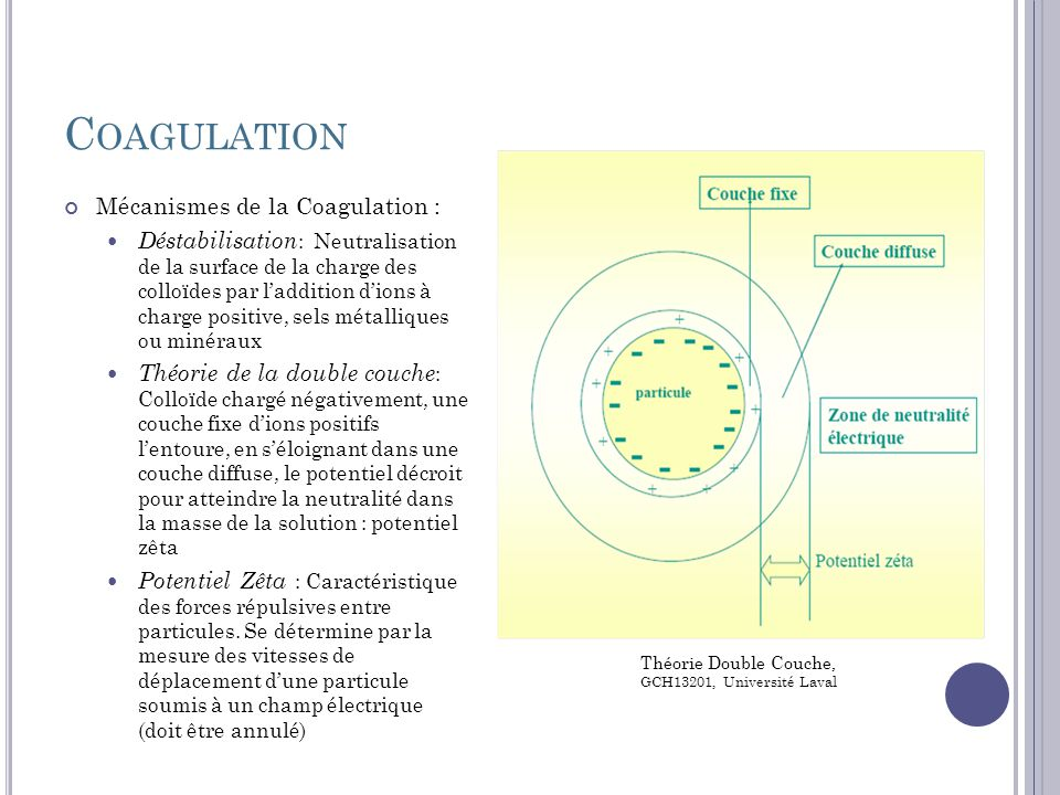 Coagulation Mécanismes de la Coagulation :