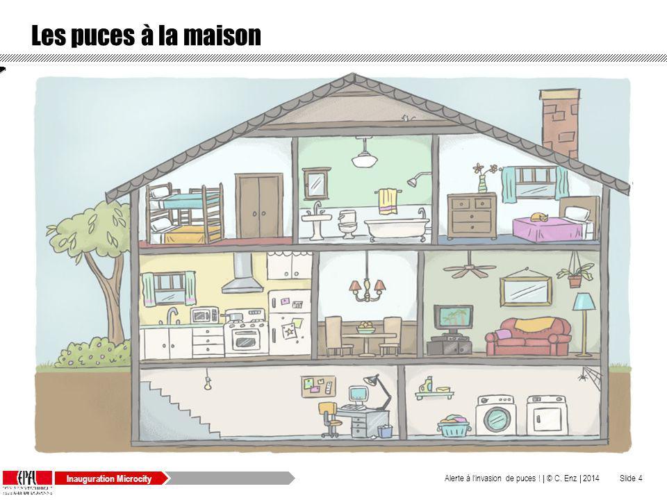 puces dans la maison des techniques naturelles pour se dbarrasser des puces sur votre chat et. Black Bedroom Furniture Sets. Home Design Ideas
