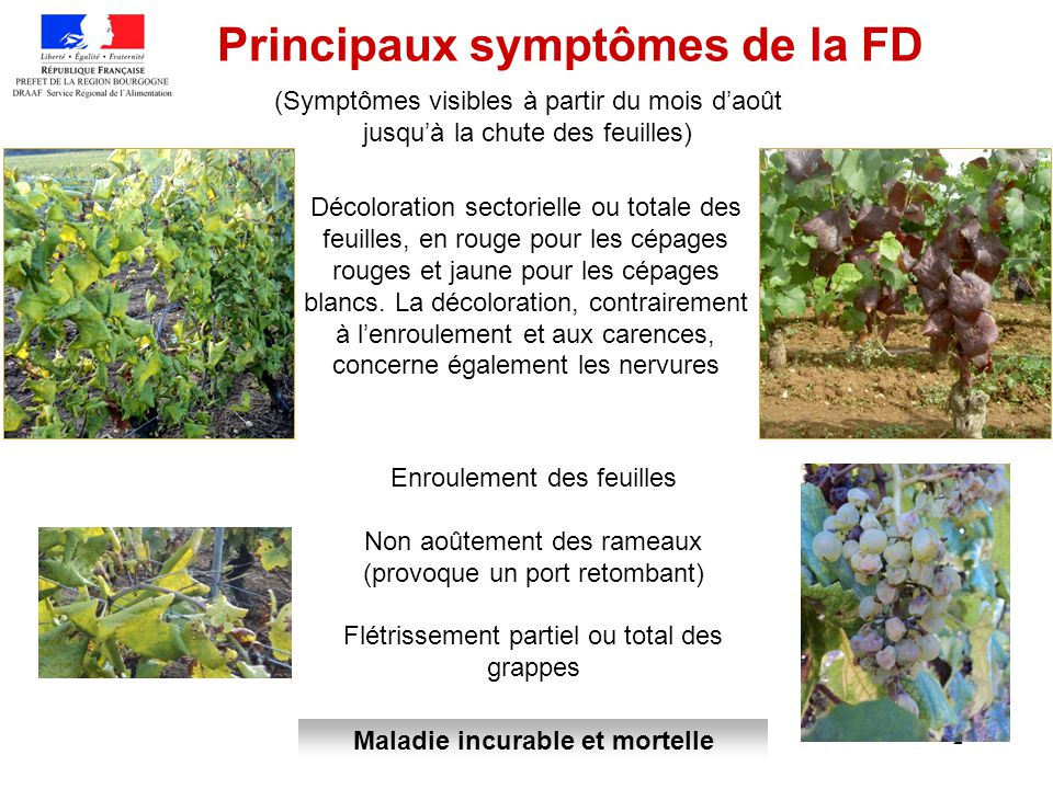 Principaux symptômes de la FD