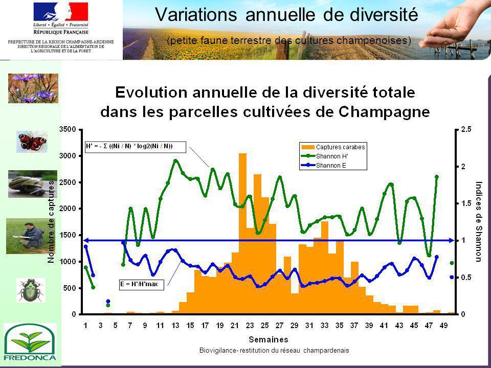 Diversité des carabes du vignoble Champenois