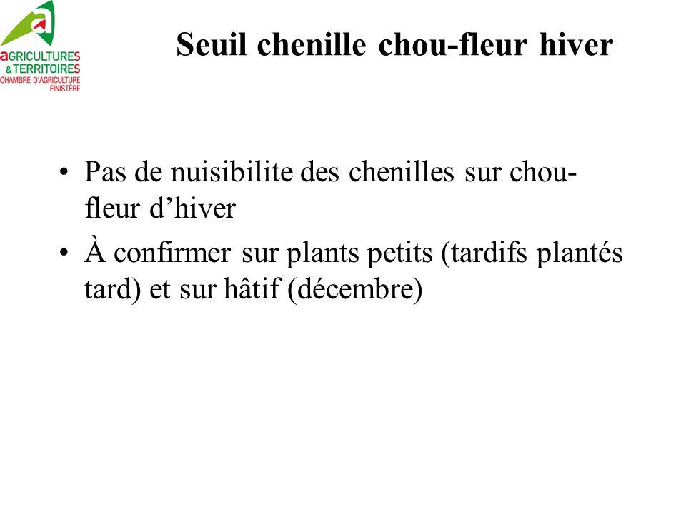 Seuil chenille chou-fleur hiver