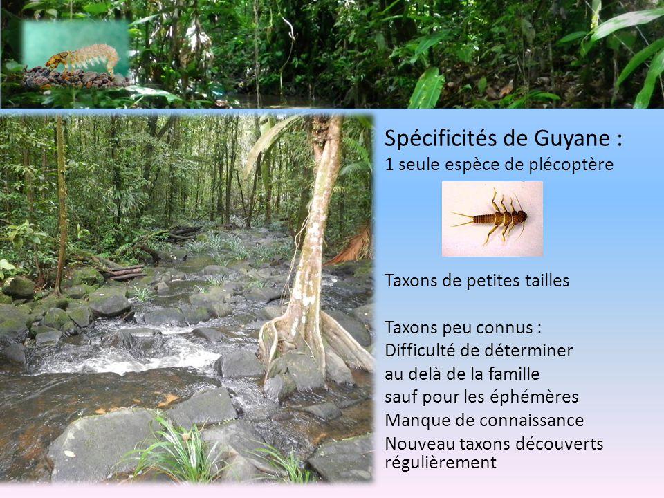 Spécificités de Guyane :