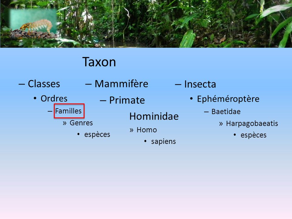 Taxon Classes Mammifère Primate Hominidae Insecta Ordres Ephéméroptère