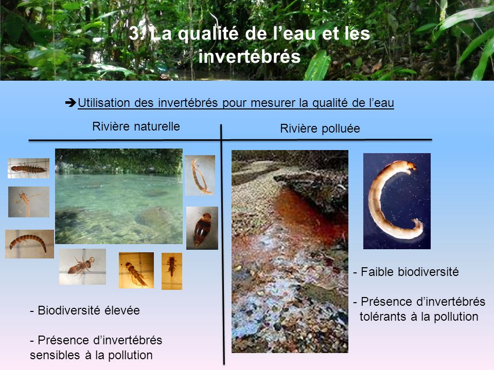 3. La qualité de l'eau et les invertébrés