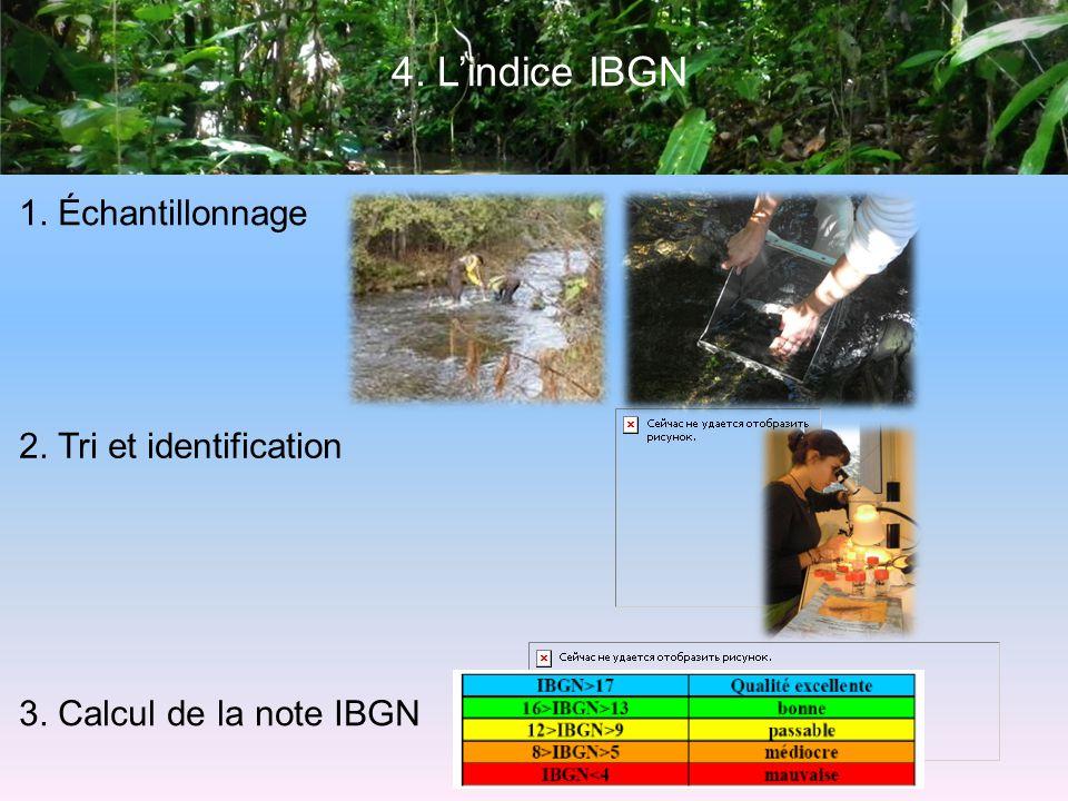 4. L'indice IBGN 1. Échantillonnage 2. Tri et identification